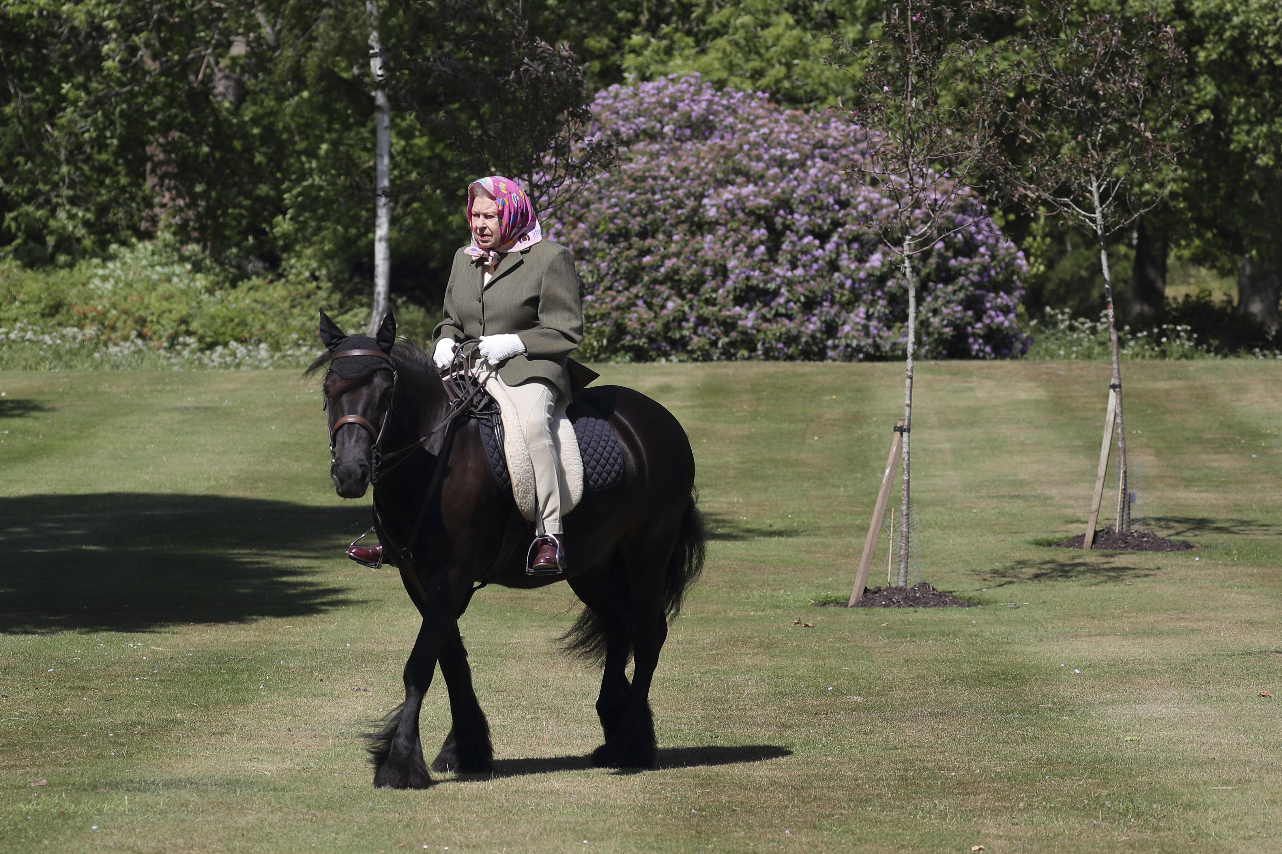 Paard Queen